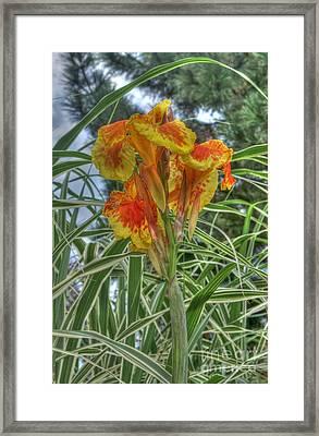 Canna Lily Framed Print by David Bearden