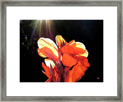 Canna Lily Framed Print by Will Borden