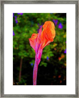 Canna Lily With Althea Framed Print by Fred Jinkins