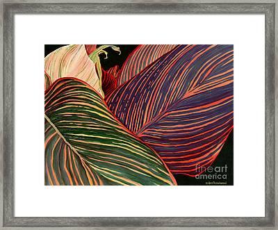 Cannas Leaves Framed Print by Kenneth Hershenson