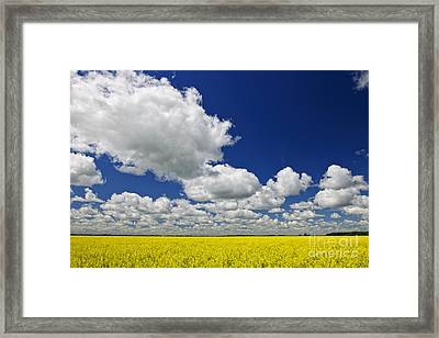 Canola Field Framed Print by Elena Elisseeva
