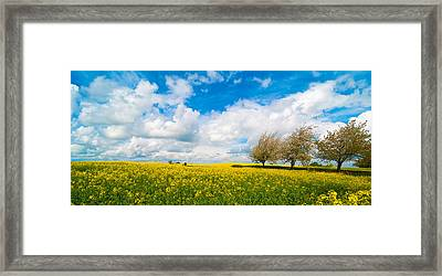 Canola Field Panorama Framed Print by Amanda And Christopher Elwell