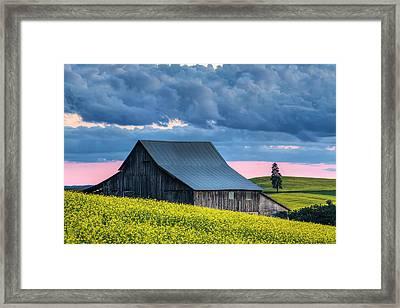 Canola Sunset Framed Print by Mark Kiver