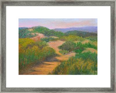 Cape Cod Grassy Dunes Framed Print by Phyllis Tarlow