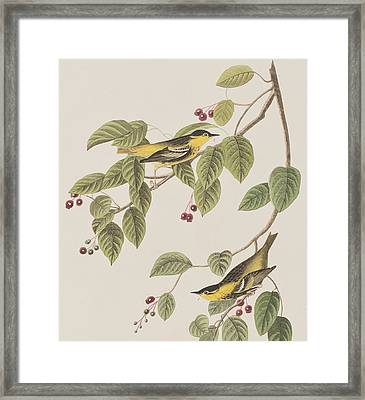 Carbonated Warbler Framed Print by John James Audubon