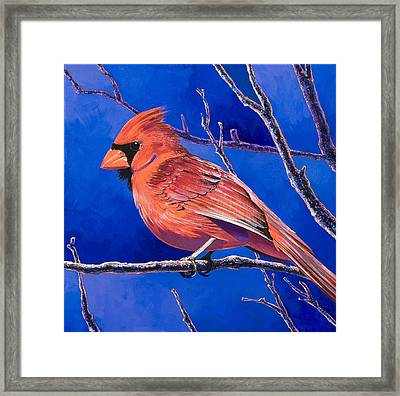 Cardinal Framed Print by Bob Coonts