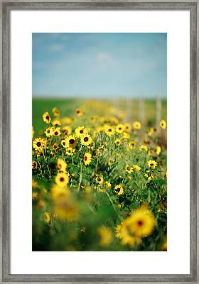 Carefree Framed Print by Todd Klassy