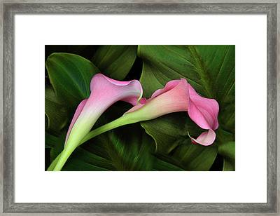 Caress Framed Print by Jessica Jenney