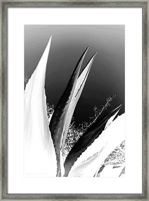 Carmel Mission Agave B And W Abstract Framed Print by Joyce Dickens