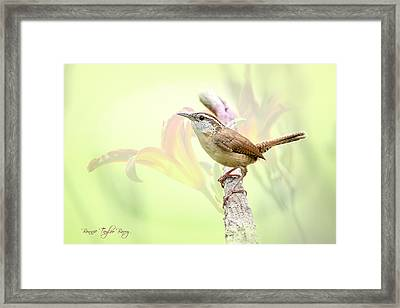 Carolina Wren In Early Spring Framed Print by Bonnie Barry