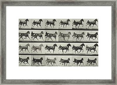 Carriage Driving Framed Print by Eadweard Muybridge