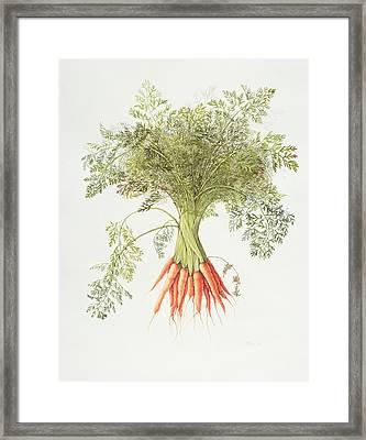 Carrots Framed Print by Margaret Ann Eden