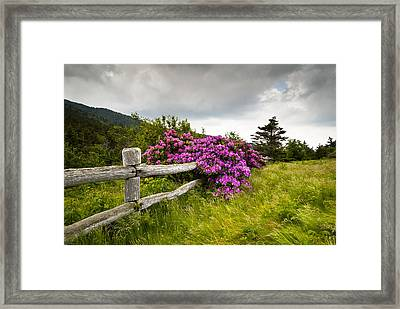 Carvers Gap Roan Mountain State Park Highlands Tn Nc Framed Print by Dave Allen