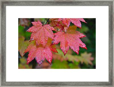 Cascade Autumn Leafs 5 Framed Print by Noah Cole