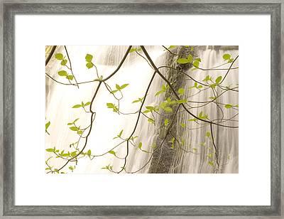 Cascade Falls Rushes Down  Cascade Framed Print by Phil Schermeister