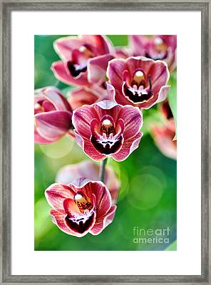Cascading Miniature Orchids Framed Print by Kaye Menner