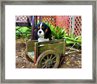 Casey In The Cart Framed Print by Patricia Stalter