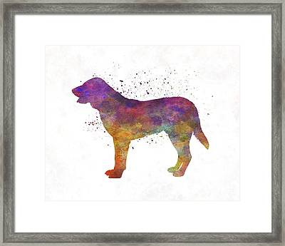 Castro Laboreiro Dog In Watercolor Framed Print by Pablo Romero