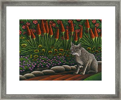 Cat - Bob The Bobcat Framed Print by Carol Wilson