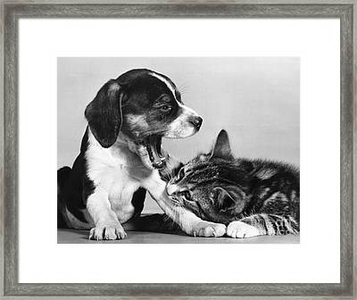 Cat And Dog Too Sleepy To Fight Framed Print by Ylla