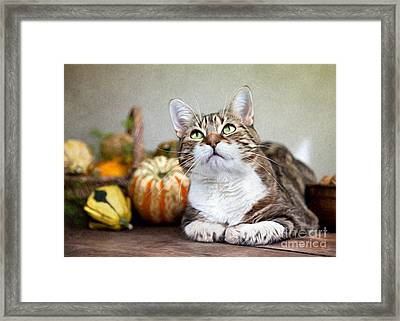 Cat And Pumpkins Framed Print by Nailia Schwarz
