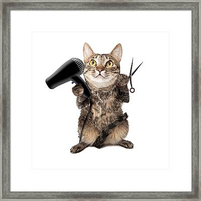 Cat Groomer With Dryer And Scissors Framed Print by Susan  Schmitz