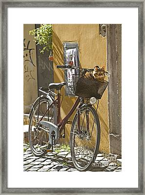 Cat In Bike Basket Framed Print by Jean-Michel Labat