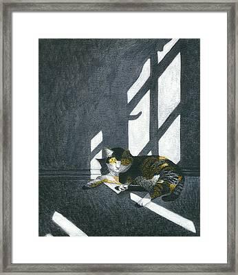 Cat In Empty Room Framed Print by Carol Wilson