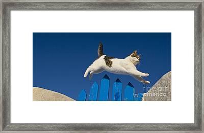 Cat Jumping A Gate Framed Print by Jean-Louis Klein & Marie-Luce Hubert