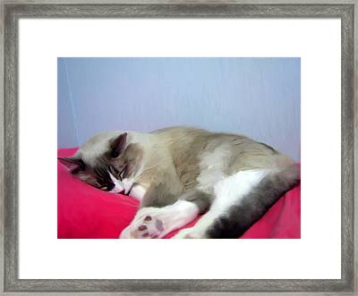 Cat Nap Framed Print by Ruth Moratz