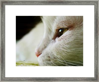 Cat Nube And I Am Perfect Photograph Framed Print by Miss Pet Sitter