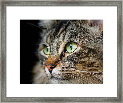 Cat Stare Framed Print by Rick Deacon