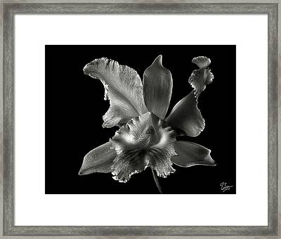Catalea Orchid In Black And White Framed Print by Endre Balogh