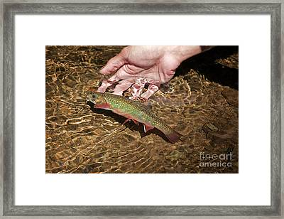 Catch And Release Trout Framed Print by John Stephens