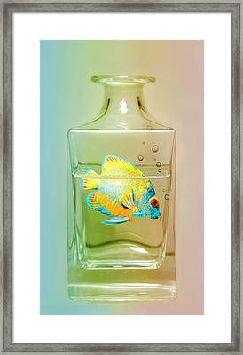 Catch Of The Day Framed Print by Diana Angstadt
