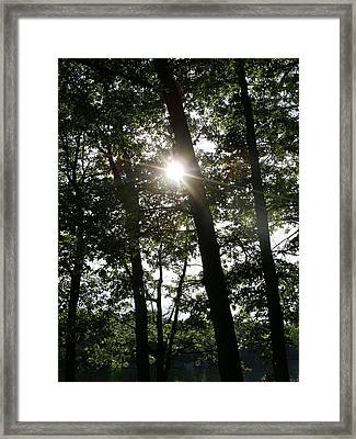 Catch The Sun Framed Print by Fareeha Khawaja