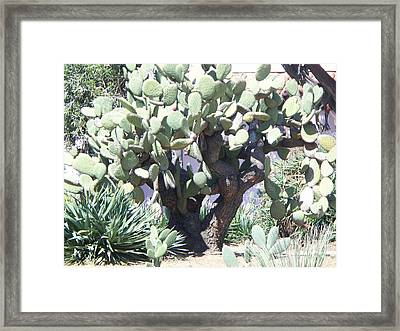 Cati  Framed Print by Sacred  Muse