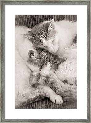 Catnapping Framed Print by Jim Hughes