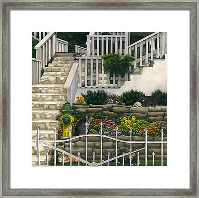 Cats Among Stairs And Garden  Framed Print by Carol Wilson