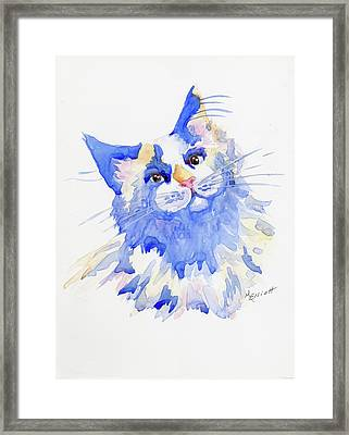 Cats Aren't Blue Framed Print by Marsha Elliott