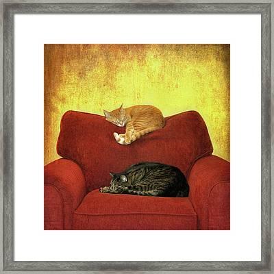 Cats Sleeping On Sofa Framed Print by Nancy J. Koch, Pittsburgh, PA