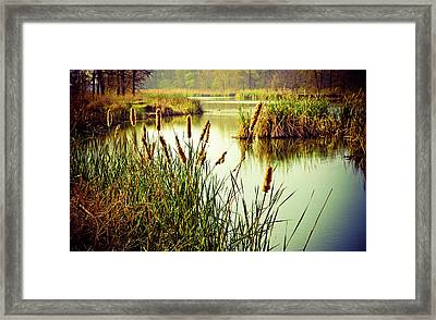 Cattails In Lake Murray Framed Print by Iris Greenwell