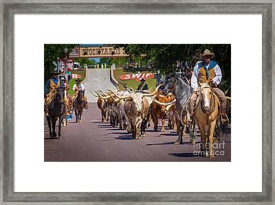 Cattle Drive Framed Print by Inge Johnsson