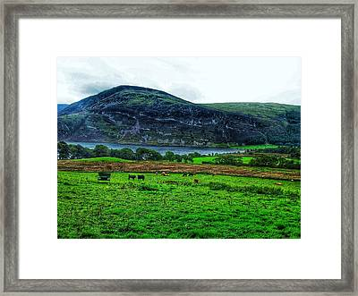 Cattle Grazing At Buttermere Framed Print by Joan-Violet Stretch