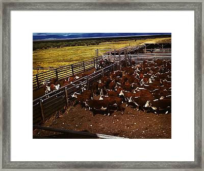 Cattle In Corrals On Ranch Framed Print by Artistic Panda
