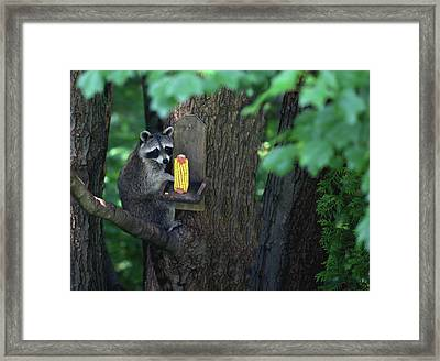 Caught In The Act Framed Print by Karol Livote