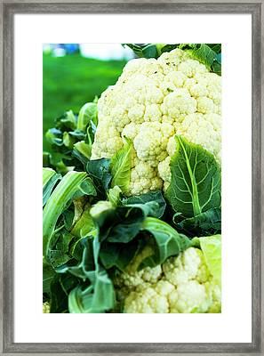 Cauliflower Head Framed Print by Teri Virbickis