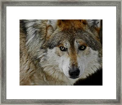 Caution Upclose Framed Print by Ernie Echols