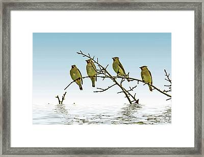 Cedar Waxwings On A Branch Framed Print by Geraldine Scull