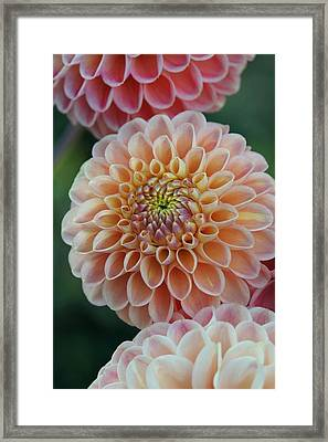 Celebration Of Color And Form Framed Print by Patricia Strand